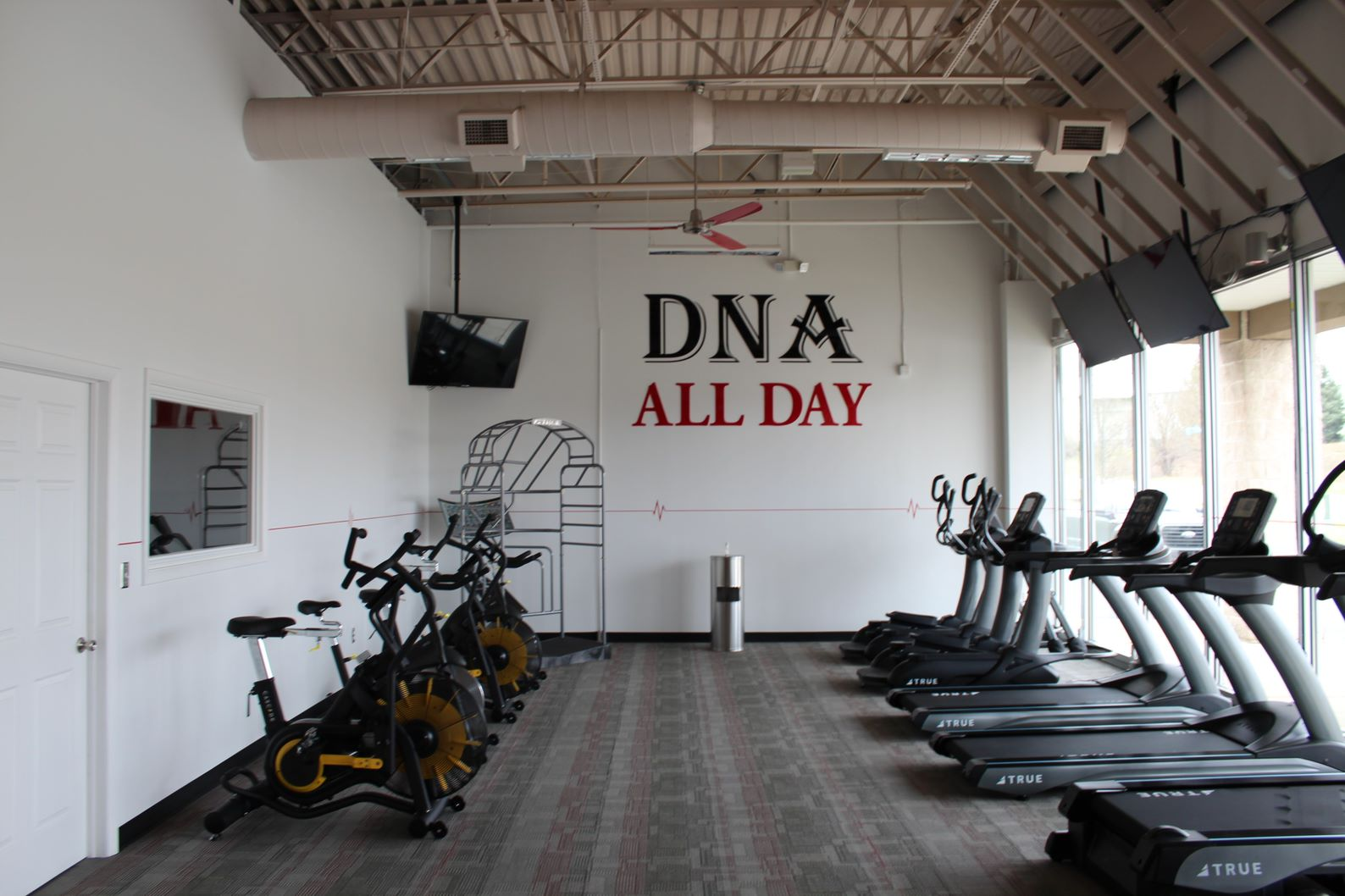 DNA-all-day